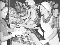 Young women work in the pineapple cannery